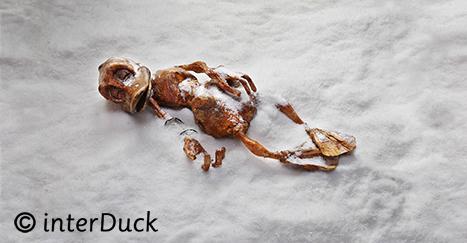 """Doetzi Sonderausstellung """"Duckomenta"""" im Archäologischen Museum Hamburg Copyright: interDuck"""